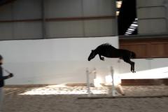 Elaba freejump 10/01/2020